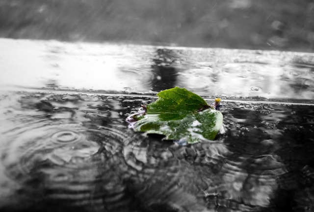 green-84649_1920
