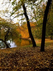 höstträd vid vatten