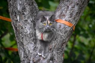 Lilly, här i rollen som kattuggla